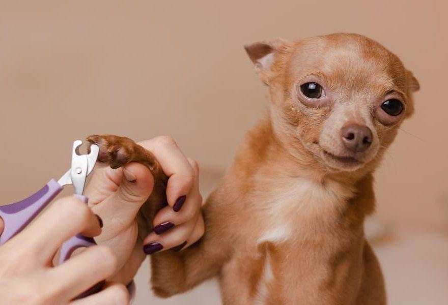 Mengapa Anda Harus Memotong Kuku Peliharaan Anjing