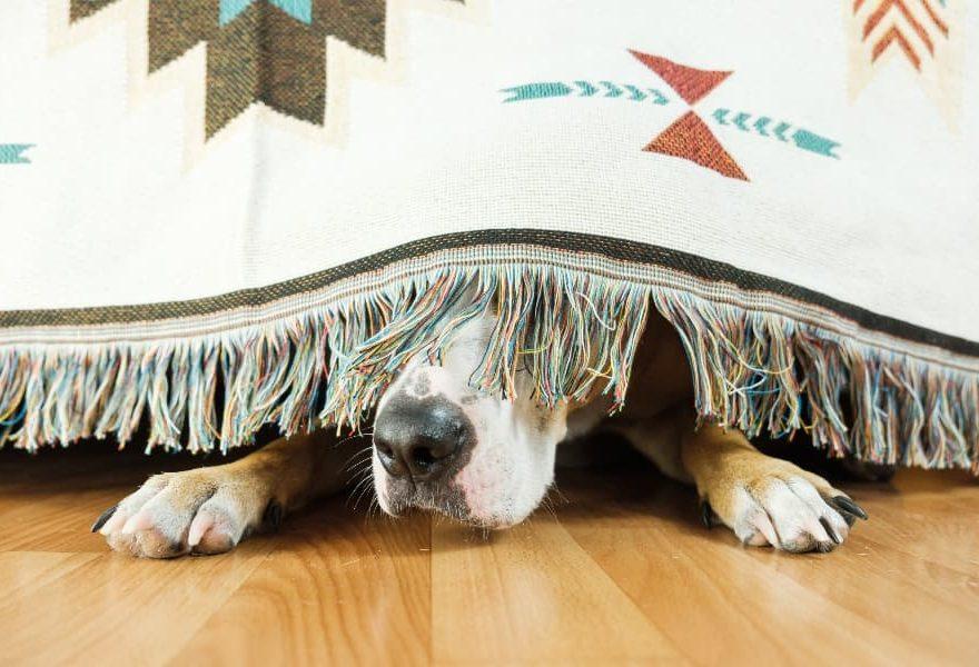 Panduan Untuk Mengatasi Kecemasan Anjing Bagian 2