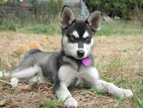 Ras Anjing Teraneh dan Unik Yang Ada di Dunia
